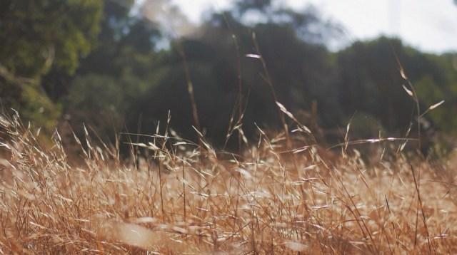grasssy