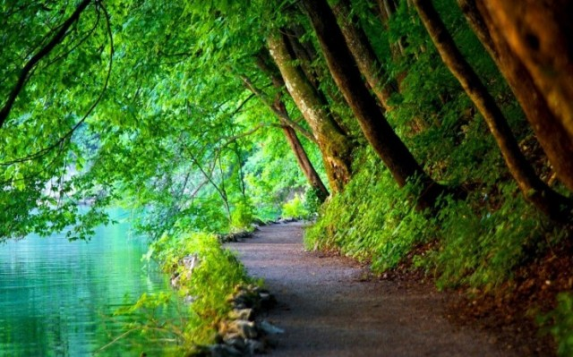 244709-nature-trees-path-river-landscape-croatia-736x459