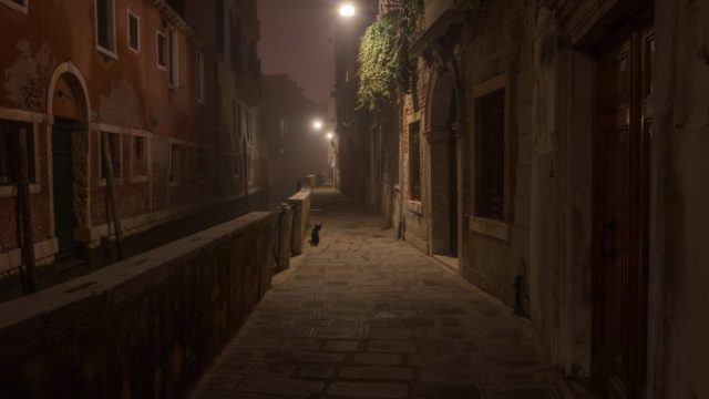 364919-architecture-building-old_building-Venice-Italy-street-house-night-lights-animals-cat-748x421